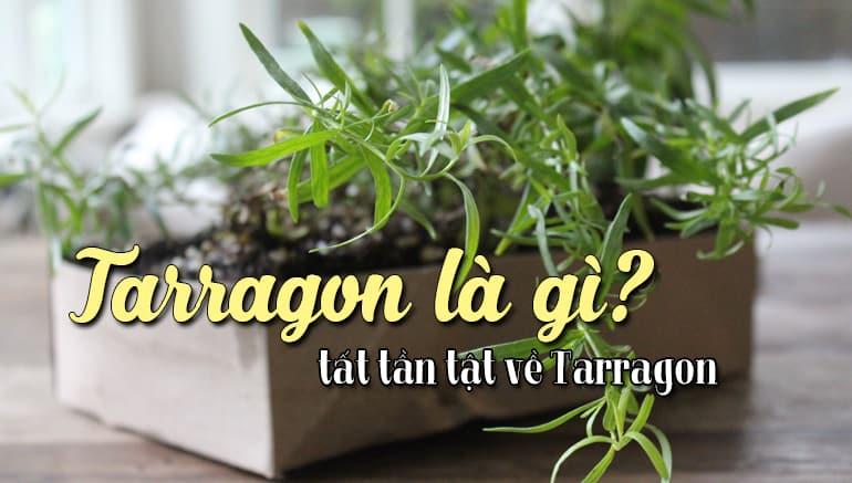 tarragon-la-gi