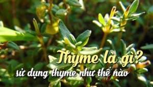thyme-la-gi